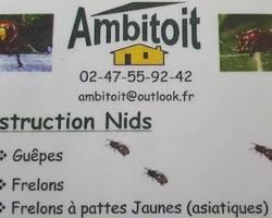 Ambitoit - AMBILLOU - Destruction nid guêpes/Frelons/Frelons asiatiques